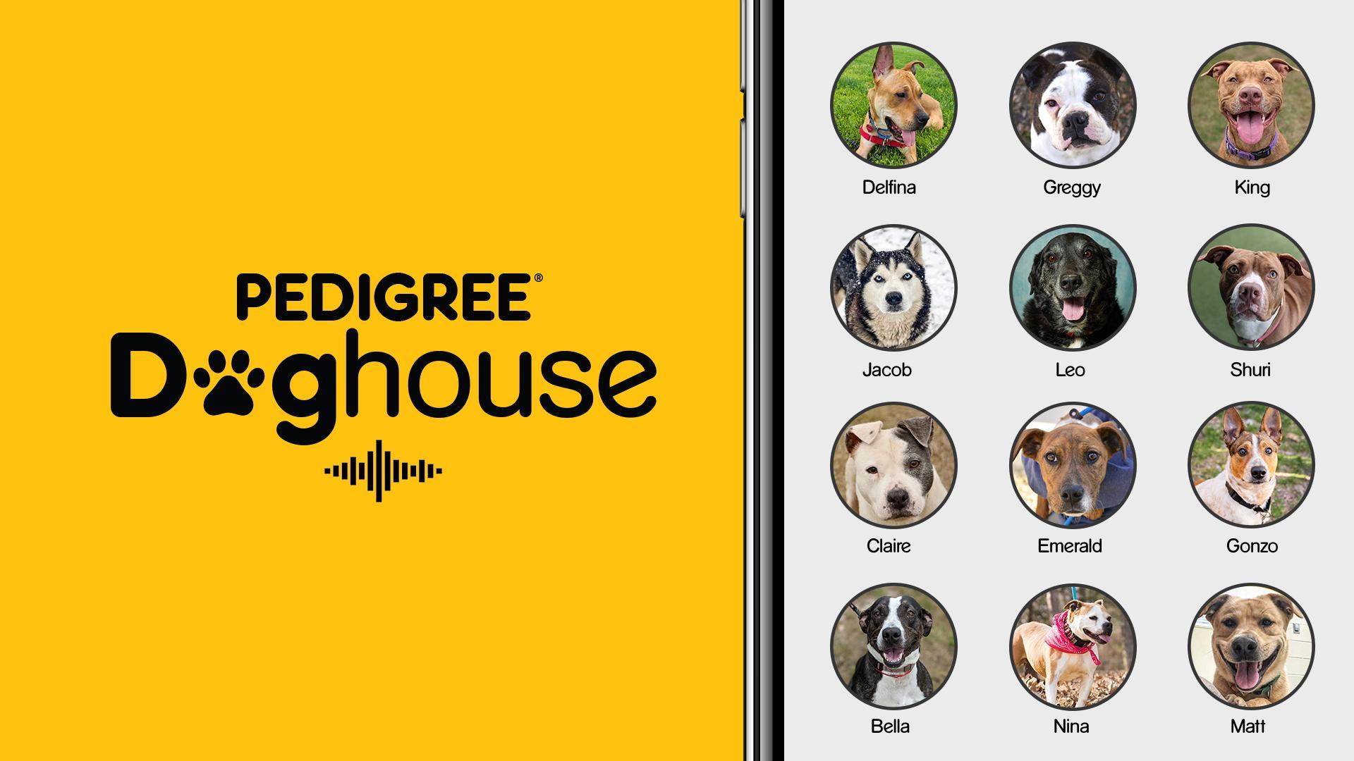 Породные собачьи будки в приложении Clubhouse