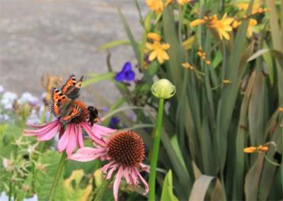 Фотография бабочек и пчелы, приземляющейся на цветок.