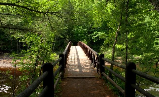 Фотография моста в лесу.