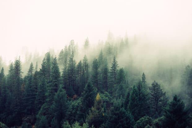 туманные деревья